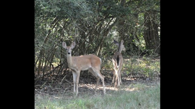 Texas Land Trends report shows value of conservation easements to ag, water, wildlife